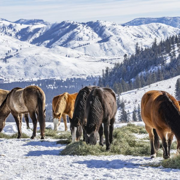 Winter at the horse ranch in the mountains of Eastern Washington state.
